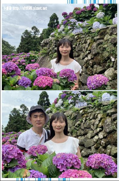 108.6.7.(157)竹子湖-大梯田生態農園.JPG