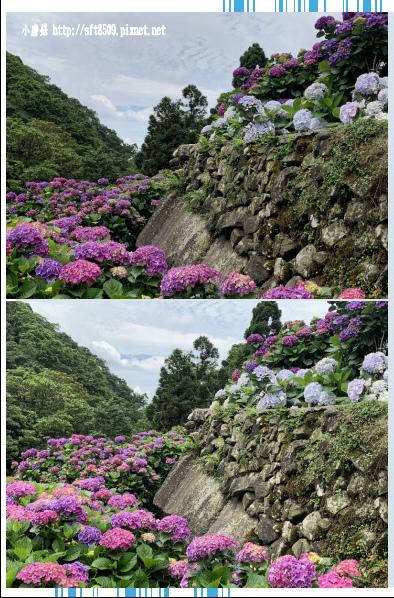 108.6.7.(168)竹子湖-大梯田生態農園.JPG