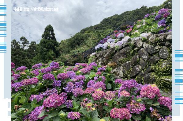 108.6.7.(172)竹子湖-大梯田生態農園.JPG