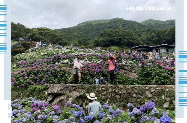 108.6.7.(179)竹子湖-大梯田生態農園.JPG