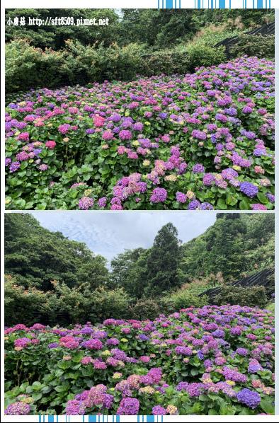 108.6.7.(180)竹子湖-大梯田生態農園.JPG