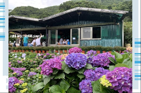 108.6.7.(208)竹子湖-大梯田生態農園.JPG