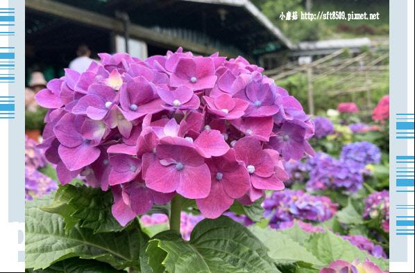 108.6.7.(212)竹子湖-大梯田生態農園.JPG
