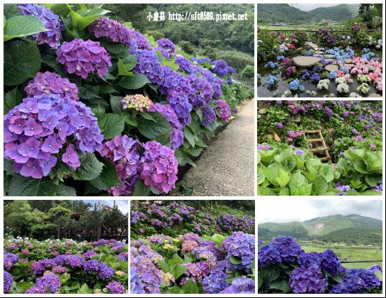 108.6.7.(201)竹子湖-名陽匍休閒農莊.JPG