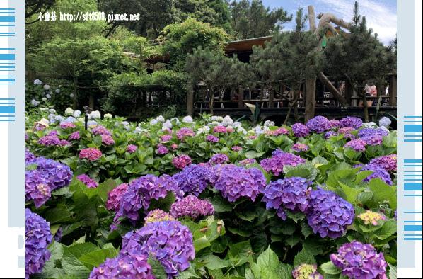 108.6.7.(14)竹子湖-名陽匍休閒農莊.JPG