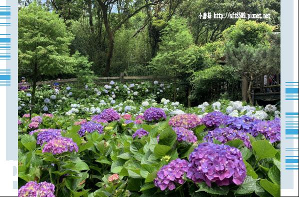 108.6.7.(18)竹子湖-名陽匍休閒農莊.JPG