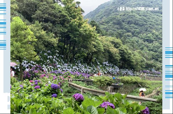 108.6.7.(38)竹子湖-名陽匍休閒農莊.JPG
