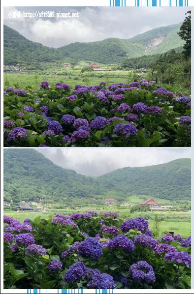 108.6.7.(60)竹子湖-名陽匍休閒農莊.JPG