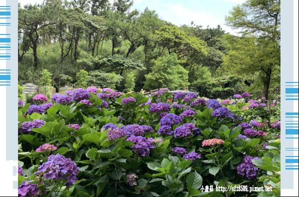 108.6.7.(62)竹子湖-名陽匍休閒農莊.JPG