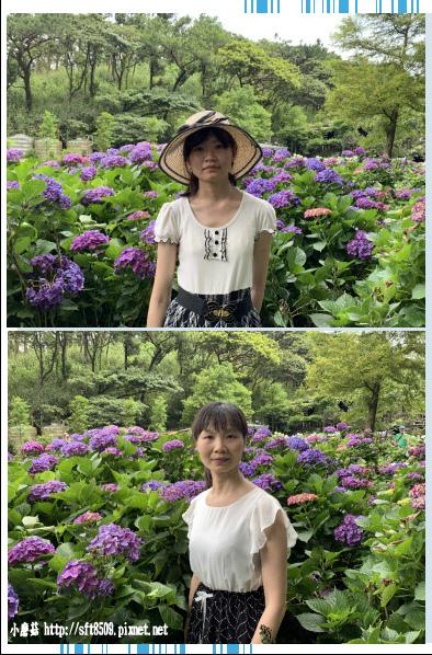 108.6.7.(63)竹子湖-名陽匍休閒農莊.JPG