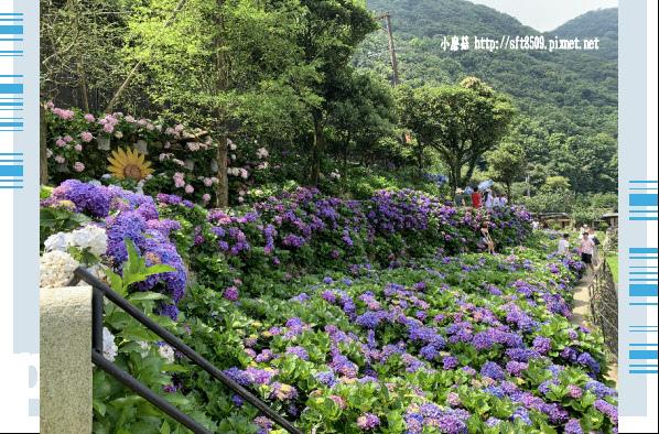 108.6.7.(101)竹子湖-名陽匍休閒農莊.JPG