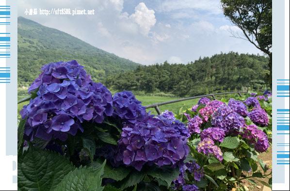 108.6.7.(111)竹子湖-名陽匍休閒農莊.JPG