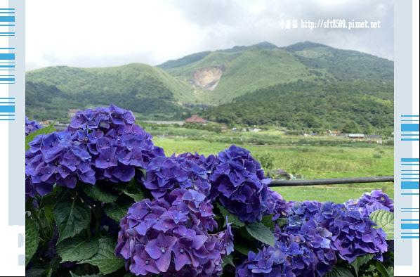 108.6.7.(112)竹子湖-名陽匍休閒農莊.JPG