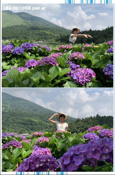 108.6.7.(115)竹子湖-名陽匍休閒農莊.JPG