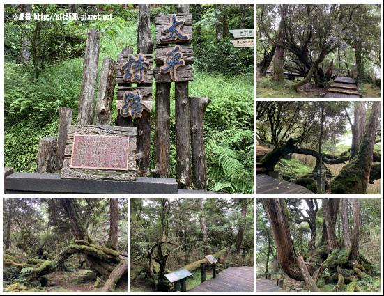 108.7.26.(146)太平山-檜木原始林自然步道.JPG