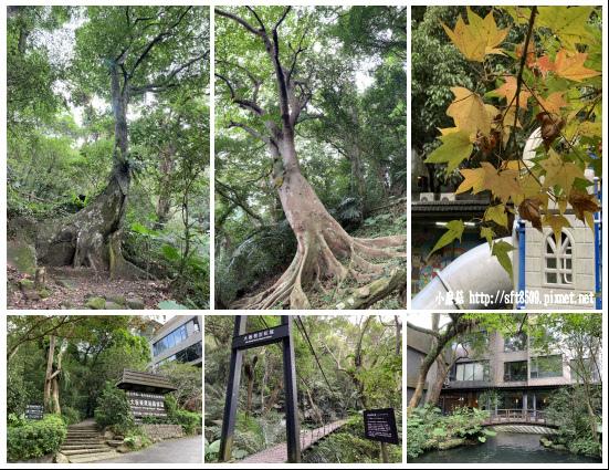 108.11.8.(199)三峽-大板根森林溫泉渡假村.JPG