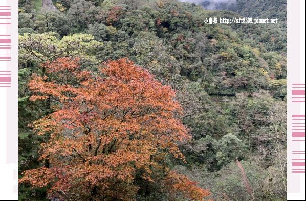 108.11.22.(2)武陵農場.JPG