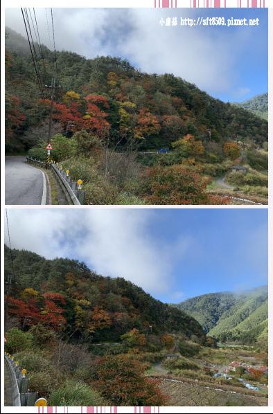108.11.22.(5)武陵農場.JPG