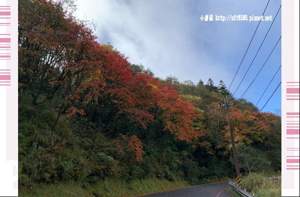 108.11.22.(6)武陵農場.JPG
