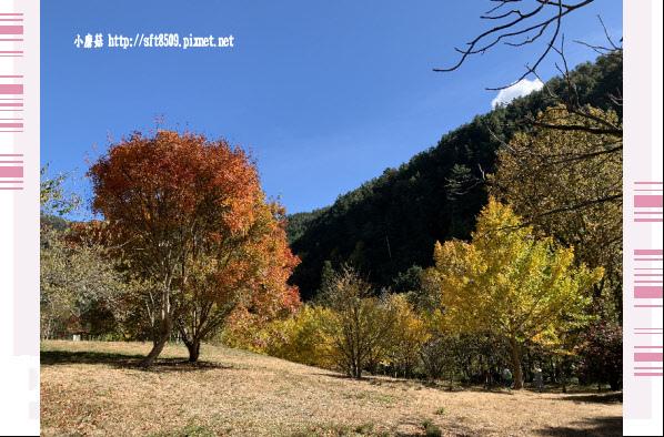 108.11.22.(15)武陵農場.JPG
