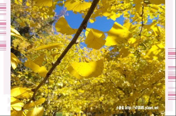 108.11.22.(20)武陵農場.JPG