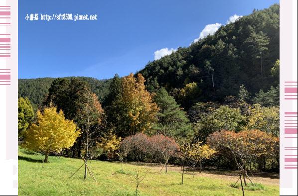 108.11.22.(23)武陵農場.JPG