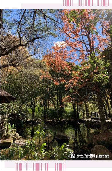 108.11.22.(28)武陵農場.JPG