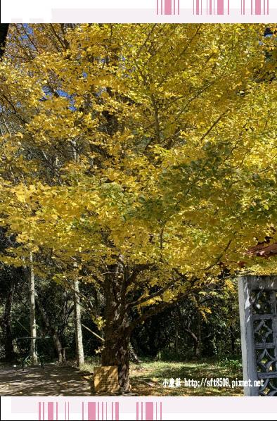 108.11.22.(35)武陵農場.JPG