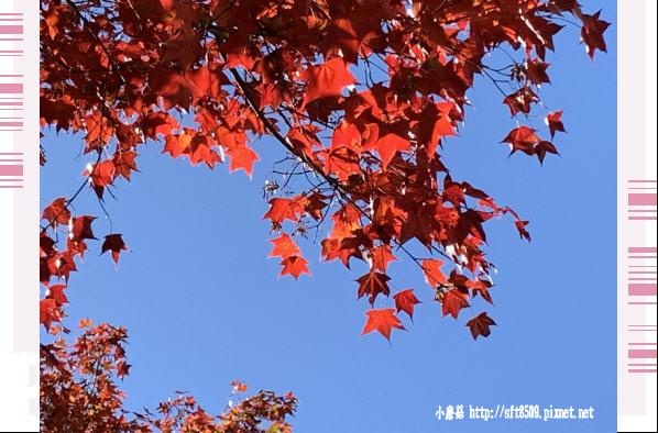 108.11.22.(44)武陵農場.JPG