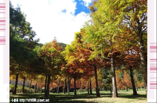 108.11.22.(55)武陵農場.JPG