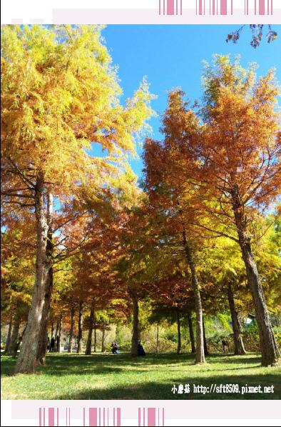 108.11.22.(56)武陵農場.JPG