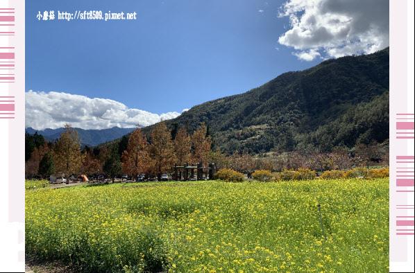 108.11.22.(73)武陵農場.JPG
