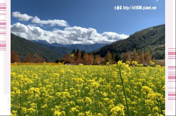 108.11.22.(80)武陵農場.JPG