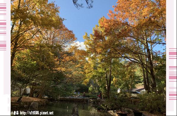 108.11.22.(109)武陵農場.JPG