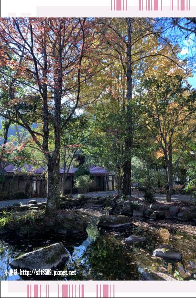 108.11.22.(110)武陵農場.JPG