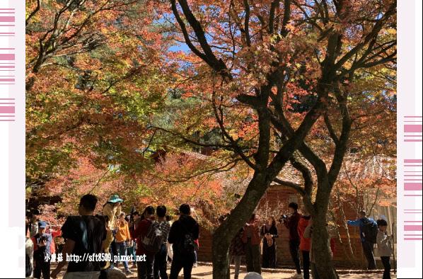 108.11.23.(4)福壽山農場.JPG