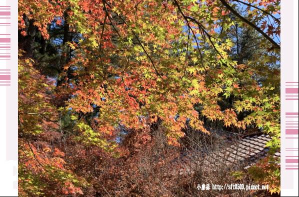 108.11.23.(7)福壽山農場.JPG