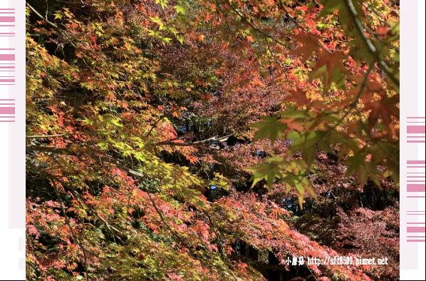 108.11.23.(8)福壽山農場.JPG