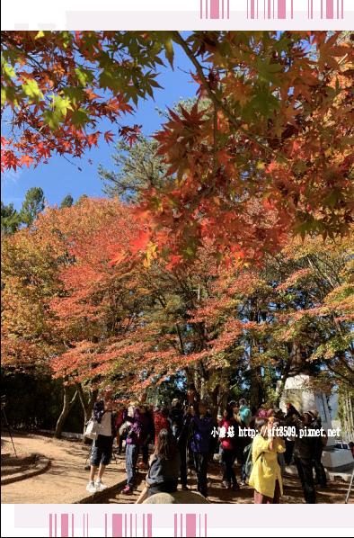 108.11.23.(19)福壽山農場.JPG