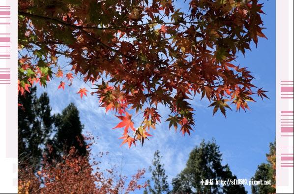 108.11.23.(25)福壽山農場.JPG