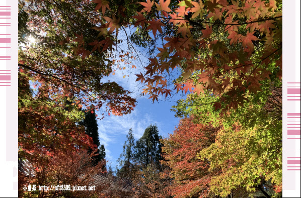 108.11.23.(27)福壽山農場.JPG