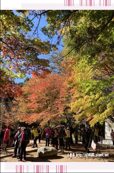 108.11.23.(30)福壽山農場.JPG