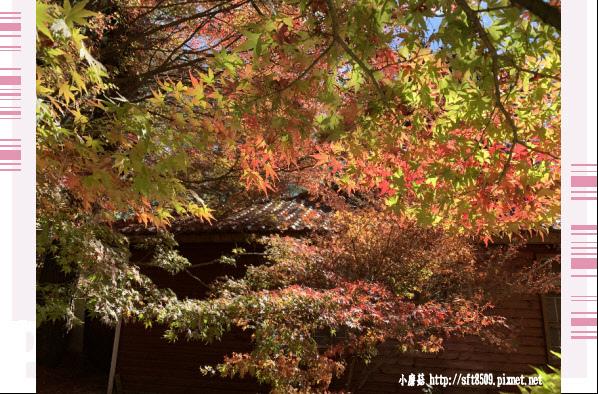 108.11.23.(41)福壽山農場.JPG