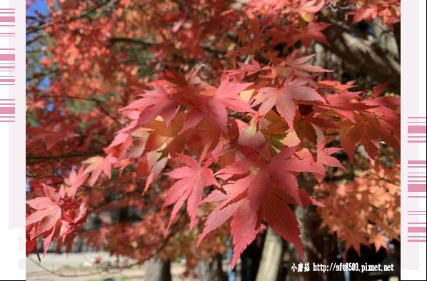 108.11.23.(50)福壽山農場.JPG