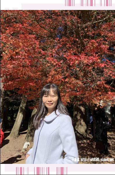 108.11.23.(54)福壽山農場.JPG