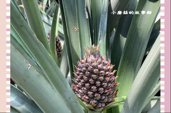 109.3.15.(63)旺萊山文創園區.JPG