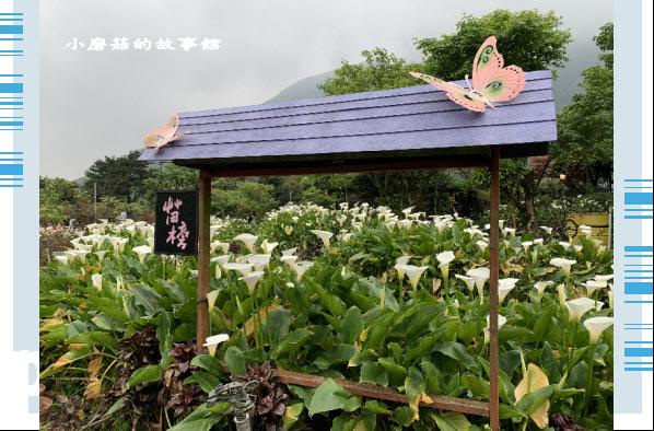 109.4.19.(19)竹子湖-苗榜海芋田.JPG