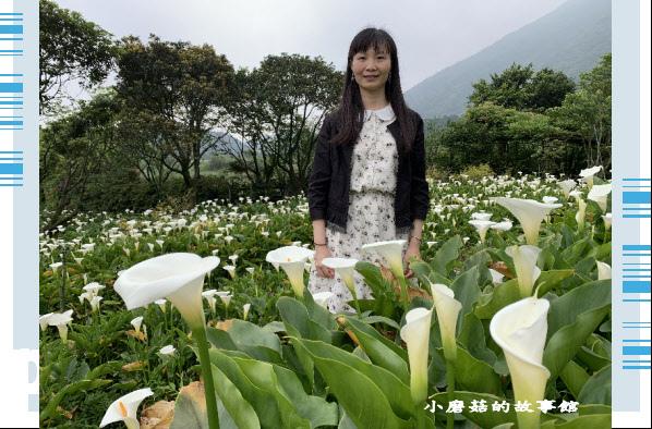 109.4.19.(52)竹子湖-苗榜海芋田.JPG
