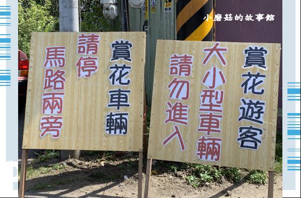 109.4.16.(2)葛瑞絲香草田.JPG