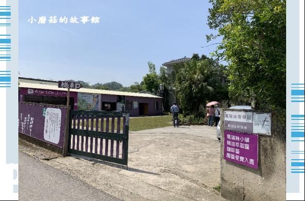 109.4.16.(7)葛瑞絲香草田.JPG